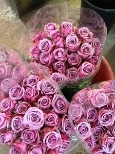 'Cool Water' roses were the flowers I used on my wedding. I was never a fan of roses, that is until I saw them in this color.