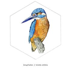 Second in series of British animal prints. The beautiful anything but Common Kingfisher! Get it here:  http://ift.tt/2cyrTNW  #london #illustrator #illustration #birds #britishwildlife #artist #art #wild #blue #orange #river #nature #hexagon #geometry #print #painting #design