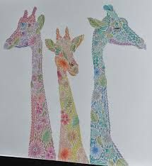 Image Result For Animal Kingdom Colouring Book