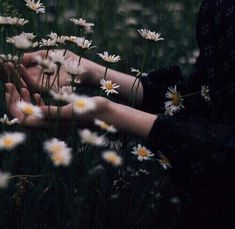 Hands in a field of flowers--photo via realityrogue (Tumblr)