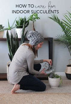 How to Care for Indoor Succulents | My Breezy Room