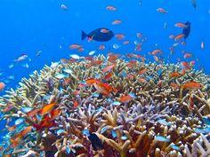 """Churashima"", die Koralleninsen (Okinawa)"