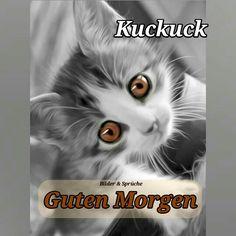 Guten Morgen | Katzen | Good morning, Cats und Good night