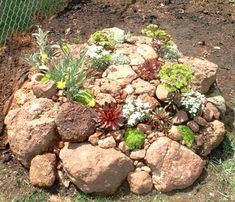 Landscape Color Schemes: Landscape Color Schemes: The rocks in this rock garden bear a reddish color. Accordingly, I selected rock garden plant material that I felt would work well with red. Succulent Rock Garden, Rock Garden Plants, Garden Stones, Succulents Garden, Rocks Garden, Diy Garden, Flowers Garden, Garden Beds, Landscaping With Rocks