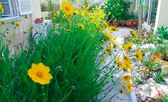 Lets create a flower garden with plants tha tdon't take much water