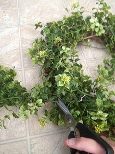 Easy Garland Wreath - The 15 Minute, 15 Dollar Wreath Green Garland, Green Wreath, Diy Garland, Boxwood Wreath Diy, Diy Wreath, Wreath Ideas, Eucalyptus Garland, Tulip Wreath, Magnolia Wreath