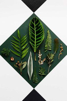 La jungla crea tendencia.