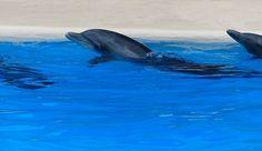 Ternyata ikan lumba-lumba bisa berbicara layaknya manusia. Fakta ini terungkat berdasarkan hasil penelitian dengan menggunakan microfon bawah air