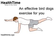 The classic core and spine stabilization exercise, bird dog, has many benefits. Here's a glimpse of the advantages and variations in bird dogs exercise. Bird Dog Exercise, Spine Alignment, Best Core Workouts, Exercise Benefits, Back Pain, That Way, Repeat, Arm, Things To Come