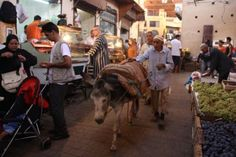 Working Donkey in the Fes Medina