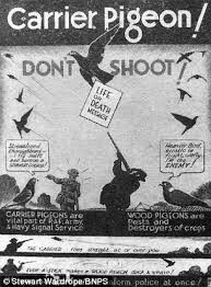 So many lives saved, thanks to the work of pigeon's during the war's.