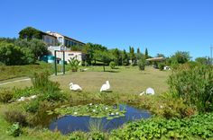 Property has been removed - Farm Sales, Golf Courses, Flora, How To Remove, Real Estate, San, Beautiful, Real Estates, Plants