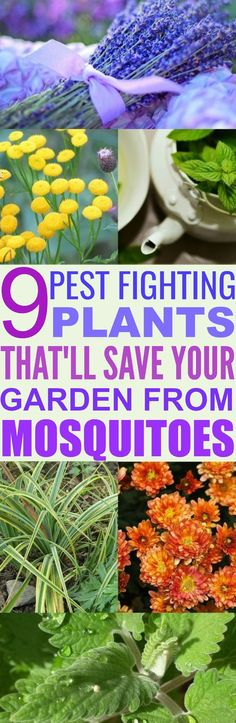 These 9 Pest Fighting Plants Are SO EFFECTIVE At Fighting Off Bugs Who Love Your Plants As Much As You Do!
