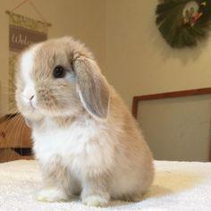 @bunnyrabbitry