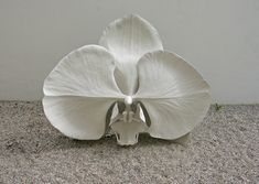 The Evolution of Desire, Marc Quinn, Materialize Dematerialize New Sculptures and Paintings, Galerie Thaddaeus Ropac