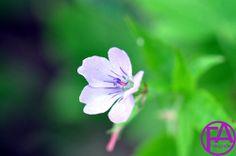 Makro-Blüte | FeenArt | Claudia Böttcher | DSC_6027WAFAFGk
