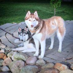 Mine to hunde er desværre stukket af