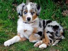 This is another one of my dream dogs