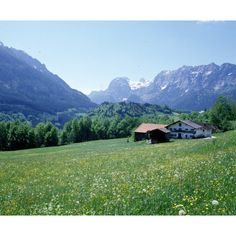 Austria Alpine meadow ❤ liked on Polyvore featuring backgrounds, meadow, photos, pictures and mountains