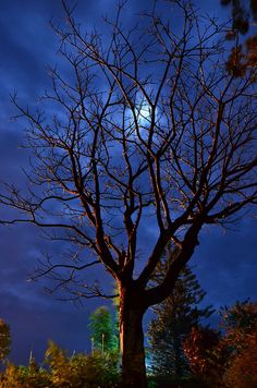 A MYSTIC NIGHT Under The Moon & Clouds at MADIKERI
