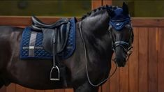 Passende Ausrüstung zum Pferd