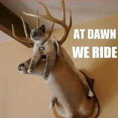 Cat on deer mount!