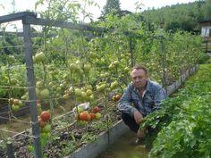 Un agricultor foarte talentat... Mi-a placut metoda sa - Pentru Ea Hydroponic Gardening, Hydroponics, Home Vegetable Garden, Growing Vegetables, Raised Beds, Homesteading, Fruit, Plants, Outdoor