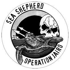 Sea Shepherd annonce l'Opération Jairo, campagne de défense des tortues marines. Appel à des volontaires pour la Floride, le Honduras et le Costa Rica.