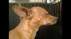 100 miles outside of Denver - Abused Dog Rescued, Recovering and Looking for a Home