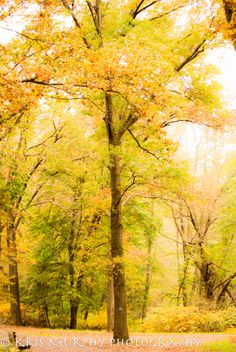 krismurphyphotography.com