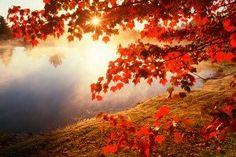 Jesienne widoki zapierające dech w piersiach! / Breathtaking fall landcapes #wallpapers #tapety #tapetynapulpit