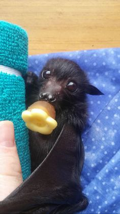 There are no ugly animals. Cute Creatures, Beautiful Creatures, Animals Beautiful, Cute Little Animals, Cute Funny Animals, Nature Animals, Animals And Pets, Ugly Animals, Cute Bat