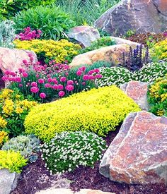 Steingarten-Mix 'Happy Flowers' Rockery Garden, Garden Arbor, Garden Landscaping, Balcony Garden, Dream Garden, Home And Garden, Garden Design, Flower Beds, Garden Furniture