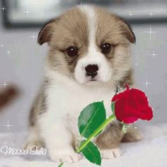 The perfect Za Tebe Animated GIF for your conversation. Discover and Share the best GIFs on Tenor. Cute Little Animals, Baby Animals, Funny Animals, Cute Dog Photos, Cute Pictures, Pet Dogs, Dog Cat, Pets, Puppy Care