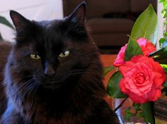 Happy Furry Friday the 13th from Milo the black cat. | Flickr ...