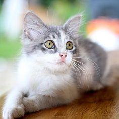 Remedios caseros para eliminar las pulgas de mi gato. Las pulgas son los parásitos externos más comunes tanto en perros como en gatos. En general, acostumbramos a asociarlas más con los cans que con los felinos. Sin embargo, al tratarse estos últimos de ...