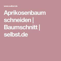 Aprikosenbaum schneiden | Baumschnitt | selbst.de