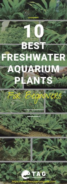 If you are new to this hobby, then this 10 freshwater aquarium plants would be perfect for your first tank setup. If you are new to this hobby, then this 10 freshwater aquarium plants would be p. le moi ° m