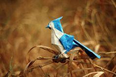 The Lifelike Origami Animal Kingdom