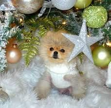 ...Lisa Vanderpump's dog, Giggy.