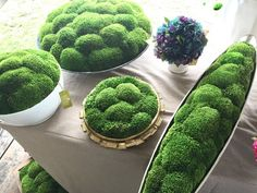 Might want to put some of these moss balls in the base of the glass cylinders if it looks too stem-y.  Moss filled planters from Round Top