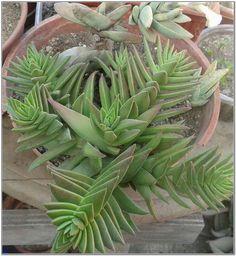 flowering house plants identification plant venusveincom
