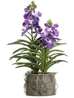 "Vanda Orchid Plant 35"" in Cement Pot Purple"