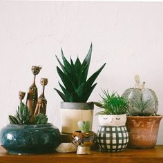 I have this thing with House Plants... Little Pots