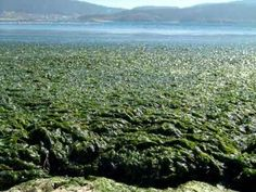 Seaweed as a Natural Fertilizer