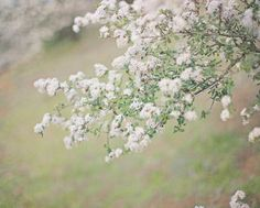 White Spring Florals Fine Art Photography Green by HoneySparrow Photography