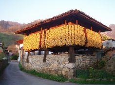 panera Asturias con una buena cosecha de maiz.