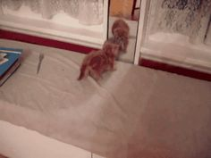 """""""WHO ARE YOU, HOW DID YOU GET IN HERE??"""" 