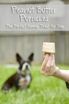 This is an easy frozen homemade treat that your will help cool your dog down especially during the Dog Days of Summer! Simple recipe will leave your dog begging for more!