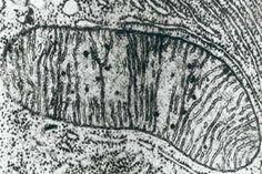 celulas vistas pelo microscopio eletronico - Pesquisa Google